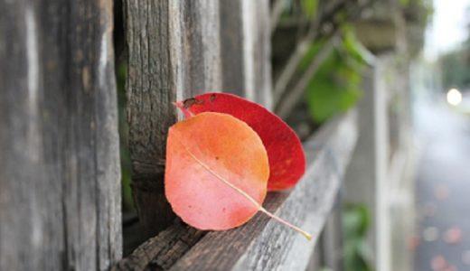 ダラスに秋がやってきた!